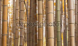 шаблон бамбуковый лес осенью
