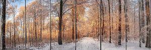 Зимний лес купается в золотом свете заката