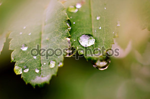 Симфония дождь.