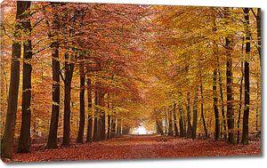 Красная дорожка в осеннем парке
