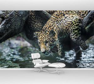 Молодой ягуар на водопое