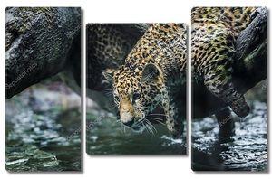 Молодая красивая jaguar