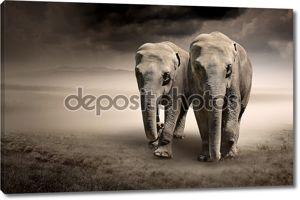Пара слонов в движении
