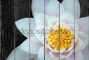 Белый цветок лотоса на черном фоне