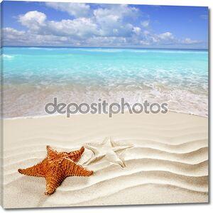 Карибский тропический пляж белого песка звезды оболочка
