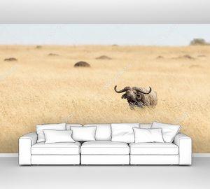 Бизон в высокой траве