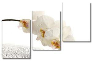 Красивая белая орхидея с каплями