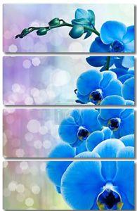 Цветок орхидеи крупным планом