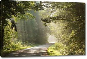 Сельская дорога через туманный лес в первой половине дня