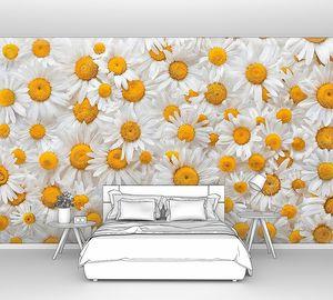 Ромашка цветочный фон
