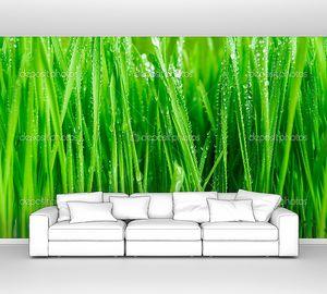 влажная трава