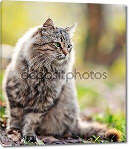 Кошка на открытом воздухе в Осенний парк