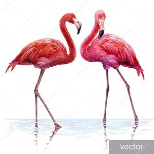 Розовые фламинго на белом фоне