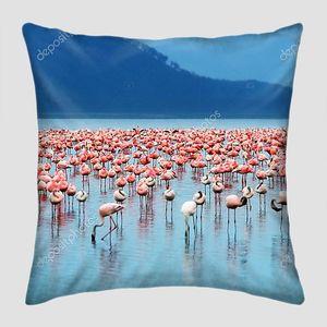 Фламинго Африки