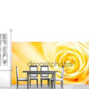 Гранж баннера с желтой розы и текстуры бумаги