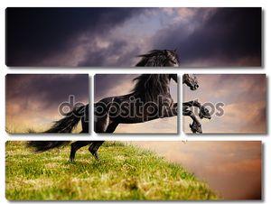Черный жеребец
