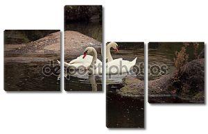Два лебедя на воде у берега
