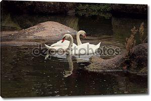 два лебедя на воде