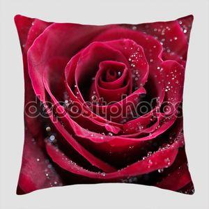 Красная роза с каплями воды, фото крупным планом
