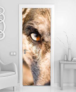 Морда собаки крупно