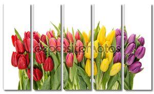 Свежие тюльпаны на белом фоне. Весенние цветы