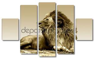 Лев в царской позе