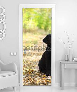 Черный лабрадор ретривер щенок