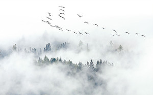 Птицы на туманным лесом