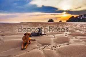 собаки на пляже на закате