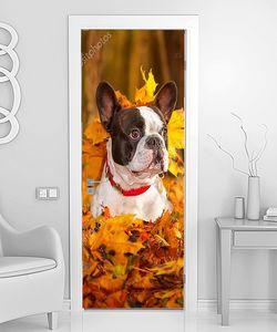 Осенняя собачья радость