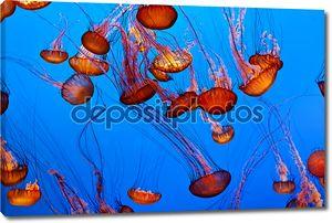 Желе рыбы в синий океан