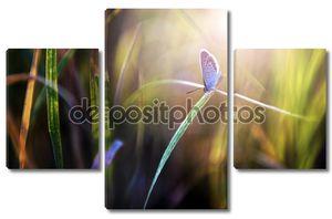 Маленькая голубая бабочка в закат