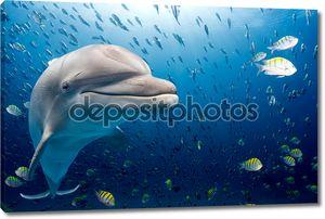 Дельфин подводный на фоне голубого океана