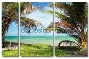 Красивых пальм на Карибском берегу