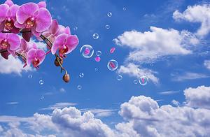 Ветка орхидеи на фоне неба