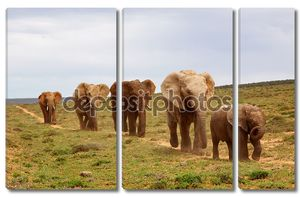 Африканские слоны вереницей