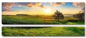 Спокойный панорамный сельский пейзаж ранним летним утром после восхода солнца, с деревом на зеленом мясе и разноцветными облаками в золотом и голубом небе