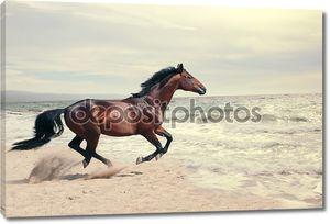 Прекрасный морской пейзаж с прекрасной бухте лошади