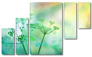 Зеленые зонтики полевых цветов