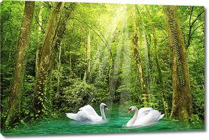 Лебеди на заросшем озере