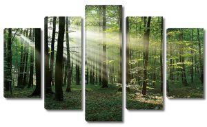 Утро в летнем лесу