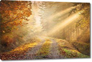 Утренняя дорога в осеннем лесу