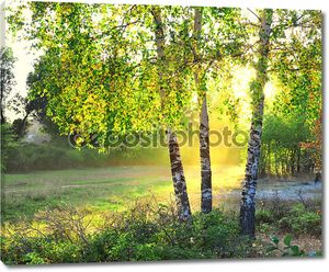 Березы в лесу летом