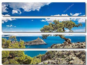 Сосна на скале в Крыму