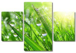 Капельки росы крупным планом на траве