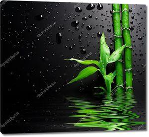 Молодой бамбук с водой