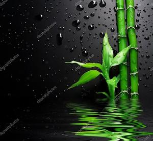 Свежие бамбук над черный