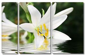 Белый цветок над водой