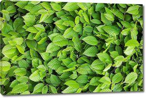 Фон из листьев
