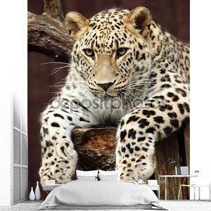Светлый леопард на дереве